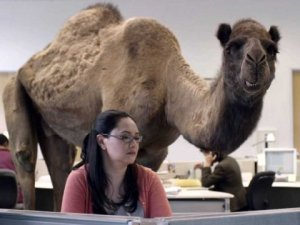 hump-day-geico-camel-2